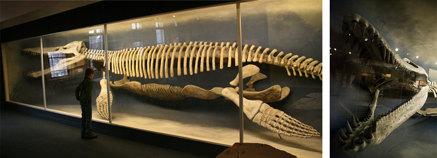 43-foot kronosaur skeleton